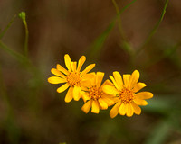 Yellow Wild Flowers 2